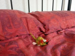 Meeseketeer on bed